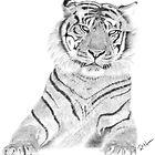Sumatran Tiger by rosannamaria