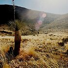Yucca on A Mountain by Distoragraphs