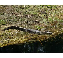 Catching Some Rays ---  Photographic Print