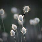 Beach Grass by JaimeWalsh
