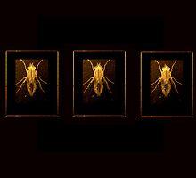 Glowfly by outsider