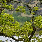 Gougane Barra Lake 4 by Georgia Conroy