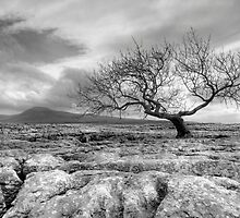 Ingleborough - 723 m (2373 ft) by SteveMG