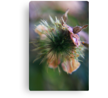 to burst open (from wild flowers collection) Canvas Print