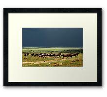 Wildebeest on the stampede Framed Print