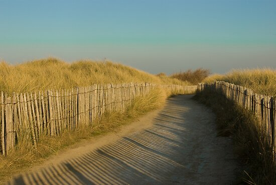 Path through the dunes by steppeland