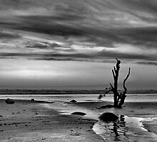 B/W stick in the sand by Robert Kendall