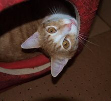Cheetoe, What a ham... by goddessteri211