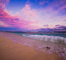 Purple Sunset by Lisa Michele Burns