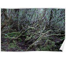 Under the Gondwana Rainforest Canopy  Poster