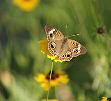 Little Brown Butterfly by TxGimGim