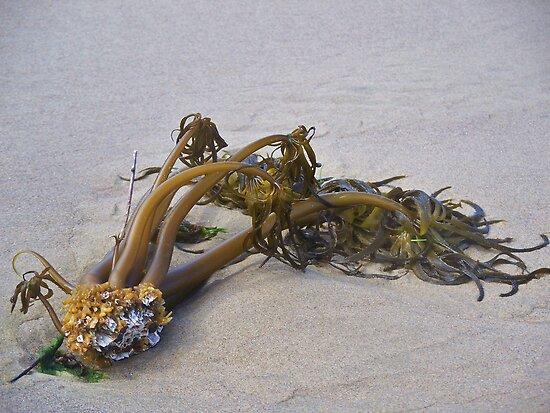 Harley Davidson Seaweed by trueblvr