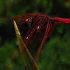 Neon-Hunting by Amrita Neelakantan