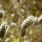 Summer Grass by Monique Basson