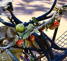 Old bicycle  by Monique Basson