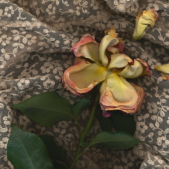 Faded Rose by slowphoto