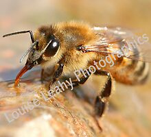 Drinking Bee by Louise Leahy  Photographics