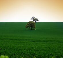 Wheat Field by naffarts