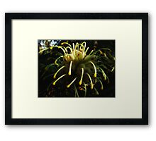 """Gentle Touch"" Framed Print"