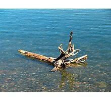 Washed Ashore Photographic Print