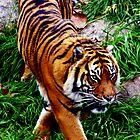 Sumatran Tiger by Melanie Roberts