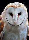Barn Owl by Krys Bailey