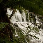 Top Cascade Liffey Falls. by nealbrey