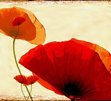 i love poppy by Anne Seltmann
