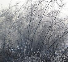 Winter bush by cowtowndogma