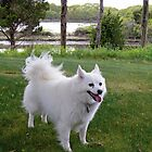 Sylvie The Wonder Dog Poses by Jack McCabe