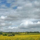 Yellow Fields - A Landscape by SimplyScene