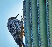 Flicker on Saguaro by Linda Gregory