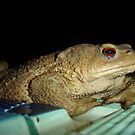 Toad by Poolside by taiche