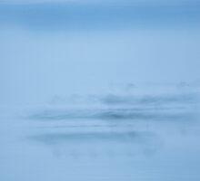 seagull, English Bay, British Columbia, Canada by Christopher Barton