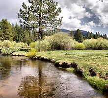 Trout Creek by Kimberly Palmer