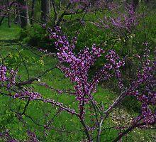 Pink of Spring by Adam Bykowski