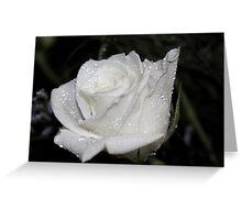 *WHITE ROSE* Greeting Card