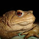 Swimming in the Bufo  by taiche