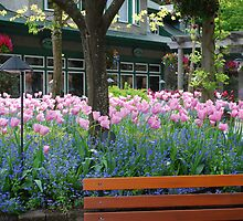 Tulips in Butchart Gardens Plaza by Carol Clifford
