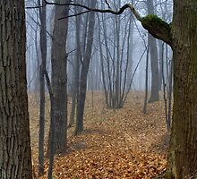 Foggy Wood by Valerii Baryspolets