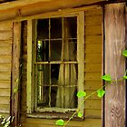 Window by kat  -