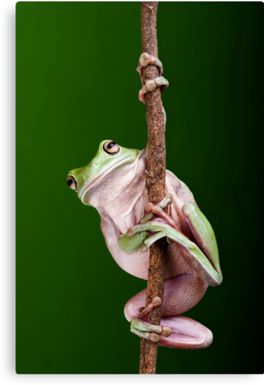 Pole Dancer by Frank Yuwono