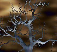 illuminate starkness by Julie Ellen