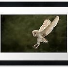 Flight of the Barn Owl by Graham Jones by Birds of Prey (Group Profile)