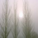 Winter Poplars in Fog 2 by SteveOhlsen