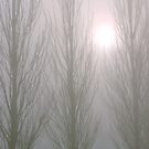 Winter Poplars in Fog 3 by SteveOhlsen