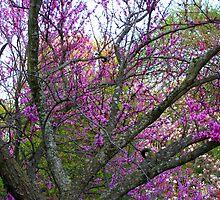 Trees in bloom by tanmari