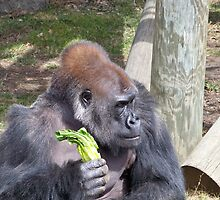 Gorilla in Thought by Nora Caswell