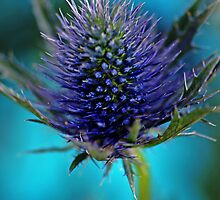 Sea Holly by Renee Hubbard Fine Art Photography