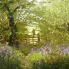 bluebell meadows III by gingerlillytea